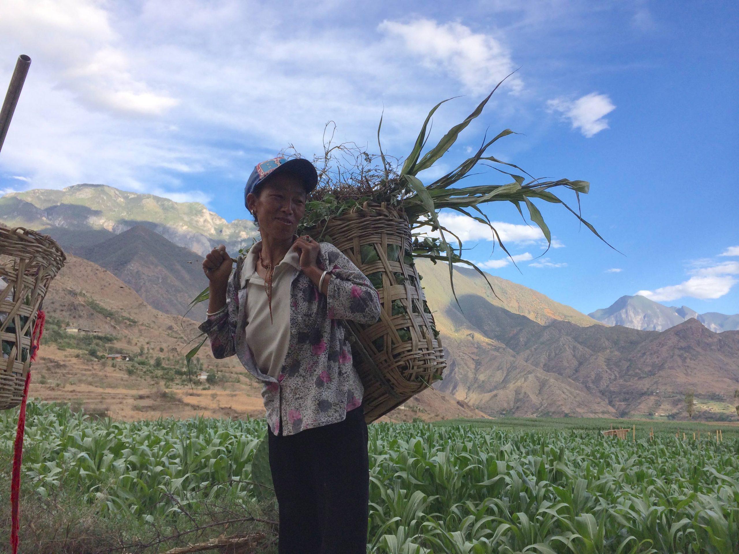 雲南省モソ人の女性の農民 貧しい暮らしを支える厳しい農業